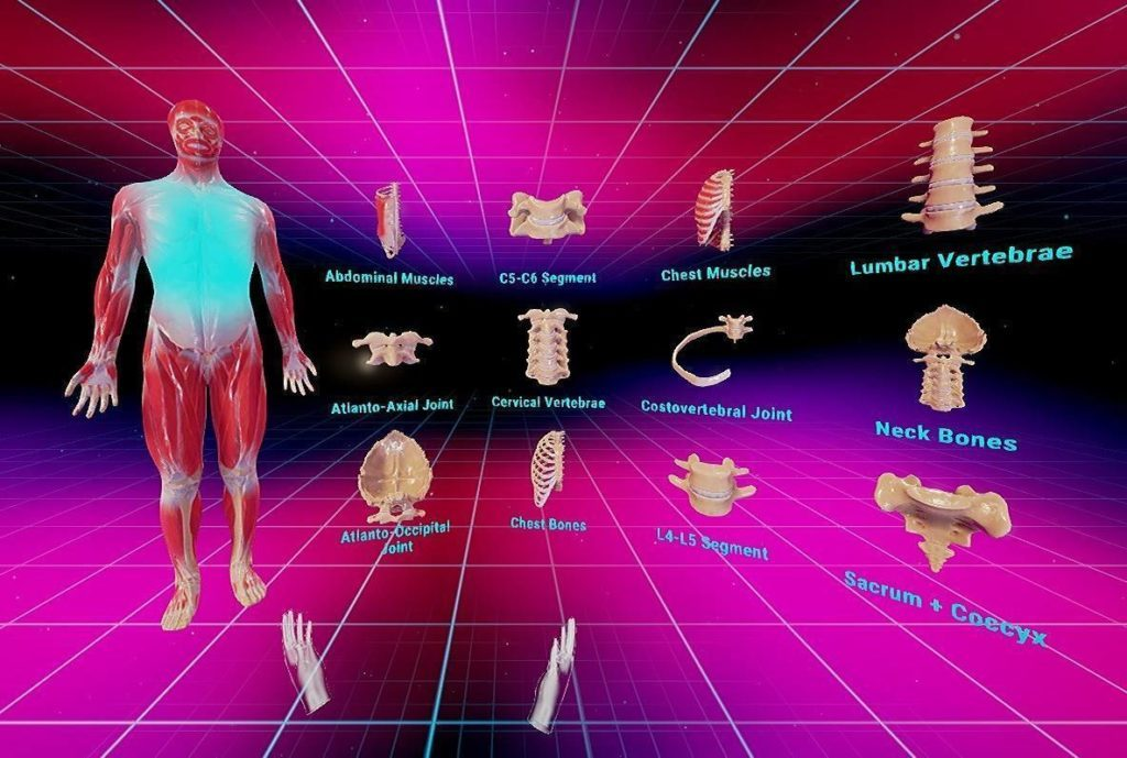 Human Anatomy Vr Complete Edition Review Vr Truths